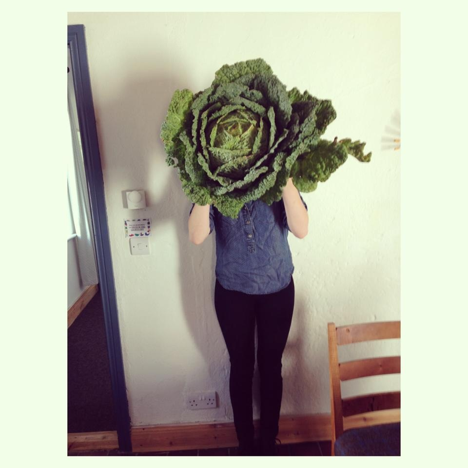The cabbages are huge!