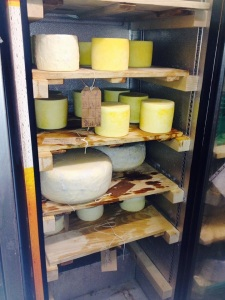 Student's Cheese Aging